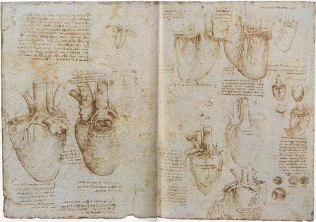 Tratado de anatomía,  El corazón.