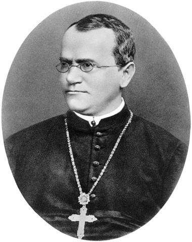 Gregor Mendel Works on Inheritance of Traits in Pea Plants