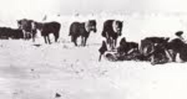 Shooting Horses