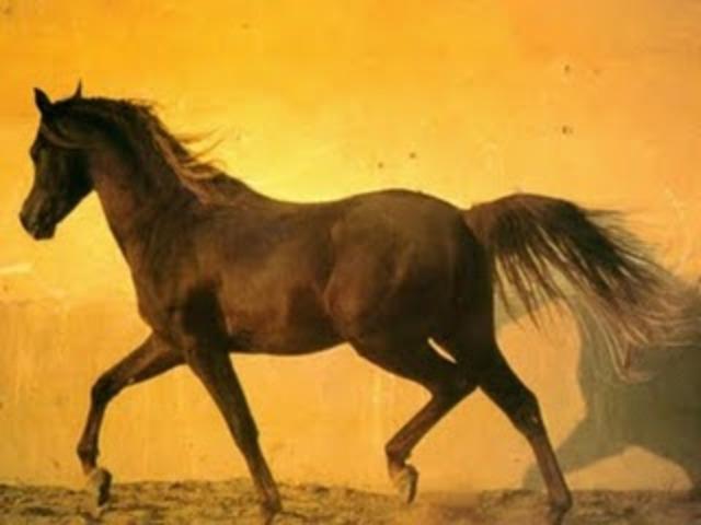 Horses Shot