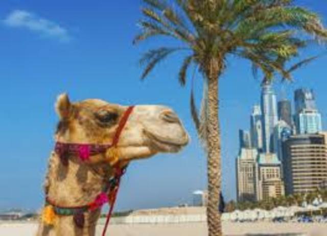 actividades árabes