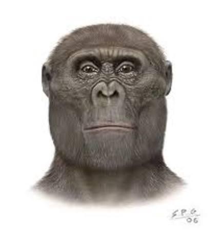 Paranthropus Aetiopicus