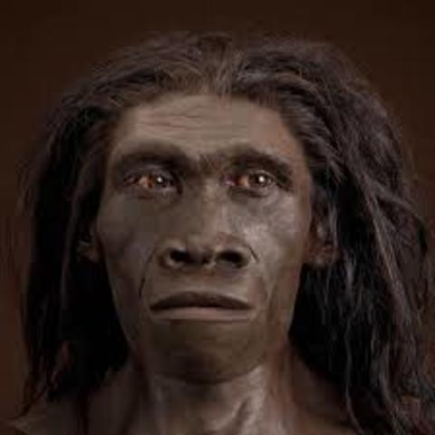 Homo Herectus