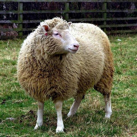 Se realiza la primera clonación a partir de una única célula madre. Nace así, la primera oveja clonada llamada Dolly.