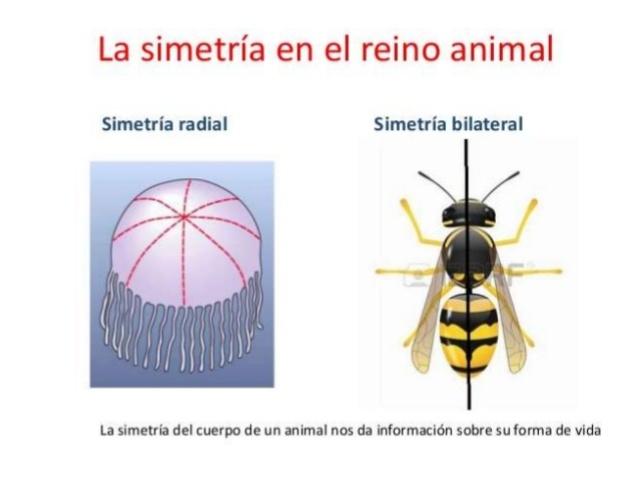 Plano Corporal de los Animales