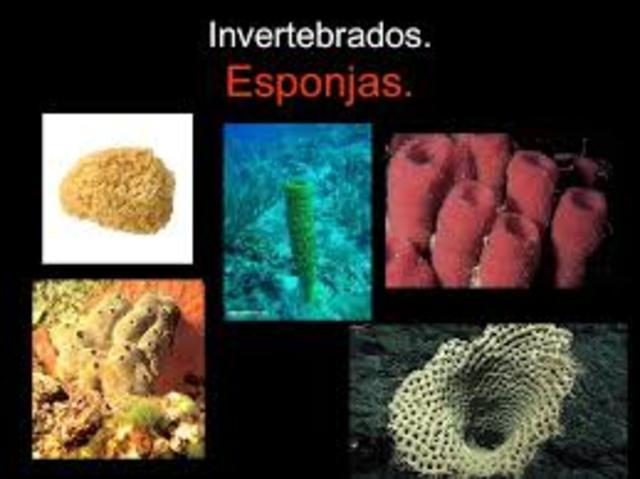 Invertebrado Esponjas