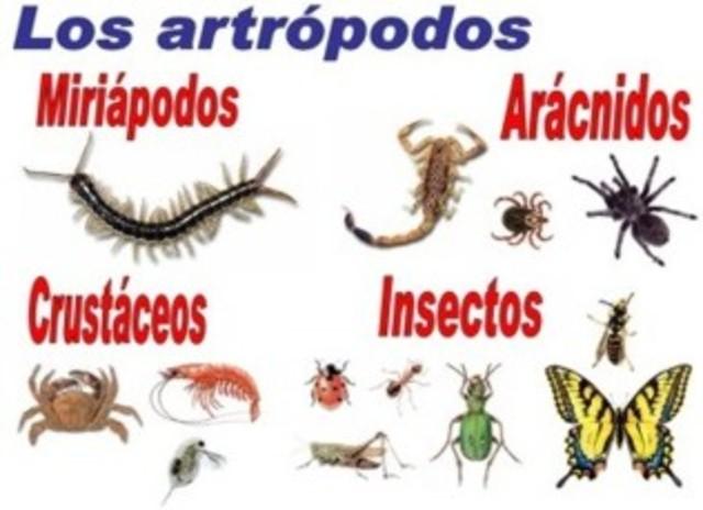 Diversidad de los Artrópodos