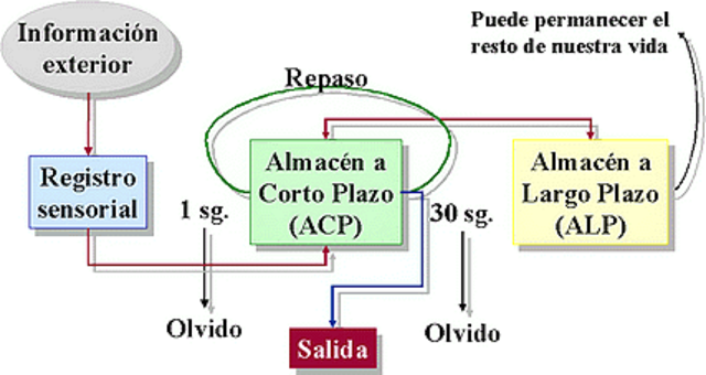 Modelo de memoria de dos almacenes: Atkinson y Schiffrin