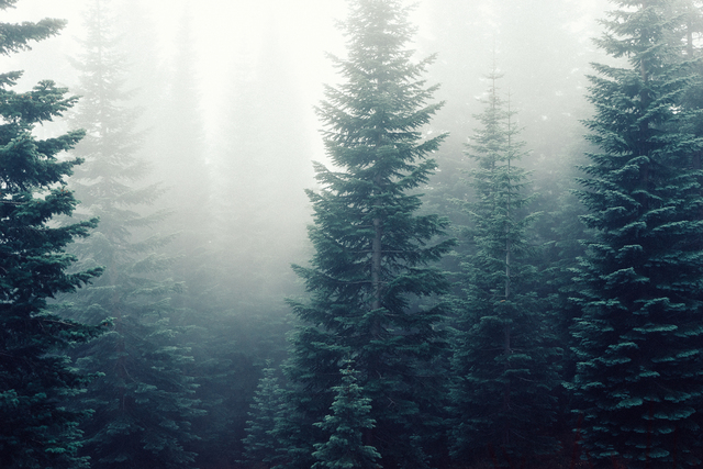 11η Συνάντηση της Ομάδας Περιβαλλοντικής Εκπαίδευσης με θέμα το Δάσος