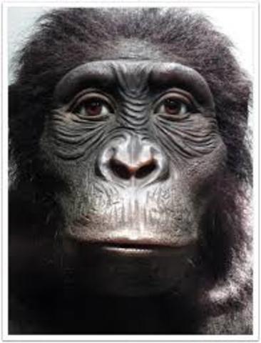 Austrolapithecus anamensis