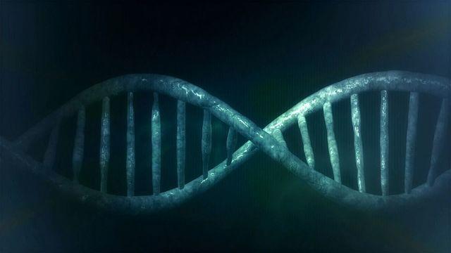 Se prohíbe clonar seres humanos
