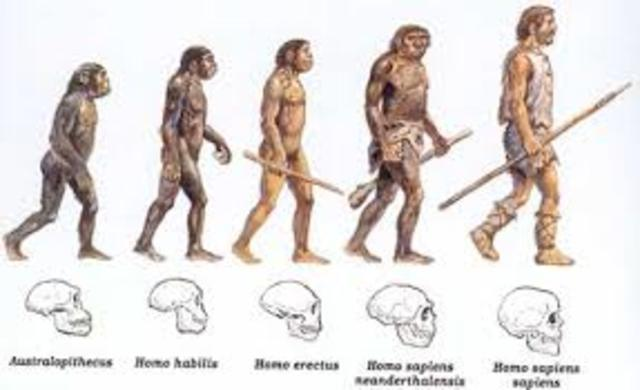 Teoria do Evolucionismo