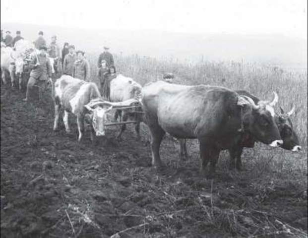 ЦК ВКП(б) и СНК СССР «О развёртывании социалистического животноводства», которое предусматривало создание животноводческих ферм в колхозах