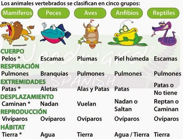 Clasificación de vertebrados