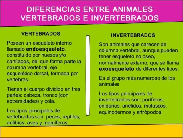 DIFERENCIAS ENTRE VERTEBRADOS E INVERTEBRADOS