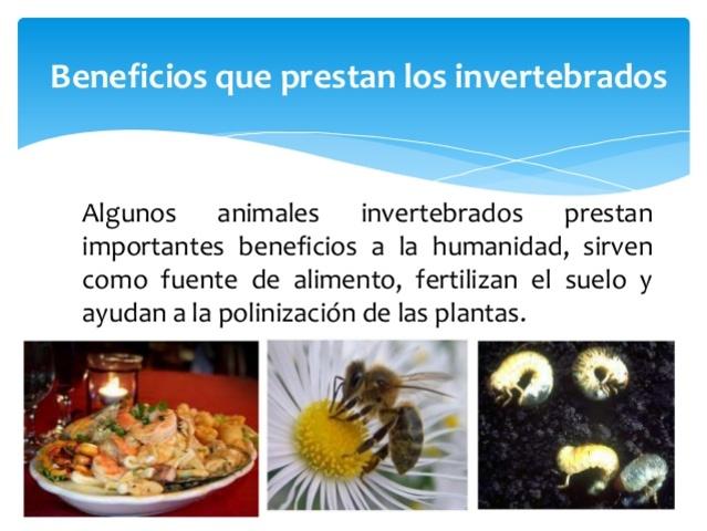 IMPORTANCIA DE LOS INVERTEBRADOS