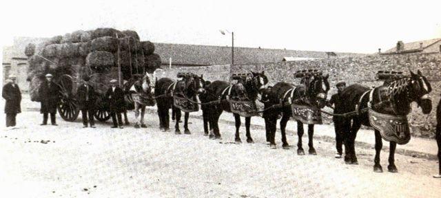 Transporte de Tiro 3000 a.C