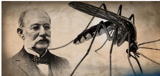 mosquito transmisor fiebre amarilla