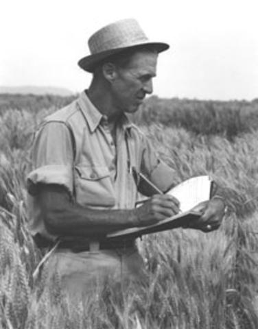 Borlaug