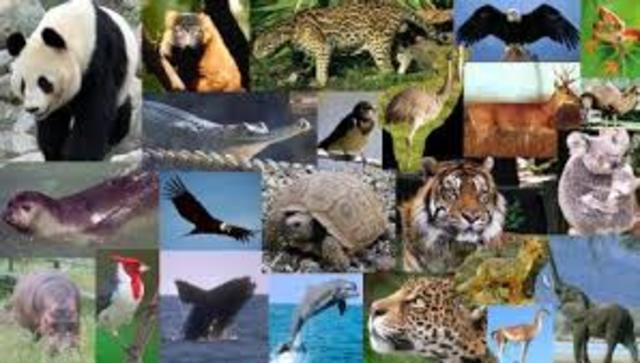 Varias especies estarán en extinción  o en peligro de estarlo.