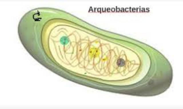 Las  arqueobacterias les dan ese color único a los manantiales