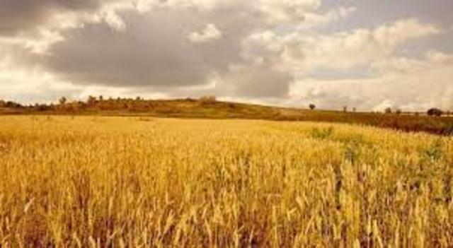 Convertimos los cereales en nuestra primera fuente de alimento y lo producimos en casi todo los terrenos del planeta