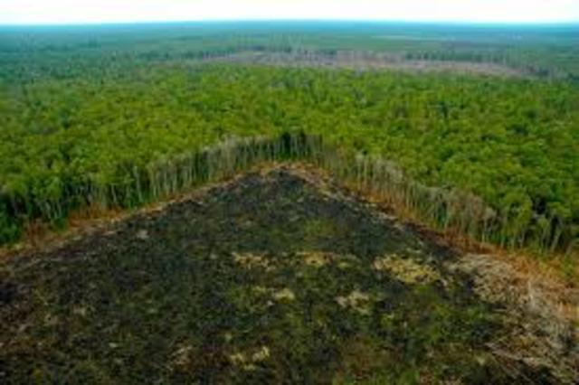 Se estipula que la selva amazona una de las mas grandes del mundo perdió un poco mas de la quinta parte de su territorio entre 1970 a la actualidad