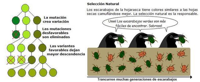 Selección natural o Evolución Biológica