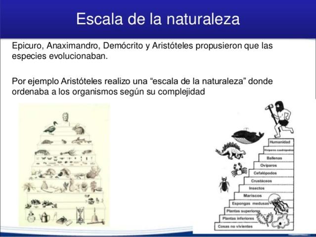 Aristoteles y la Escala Natural
