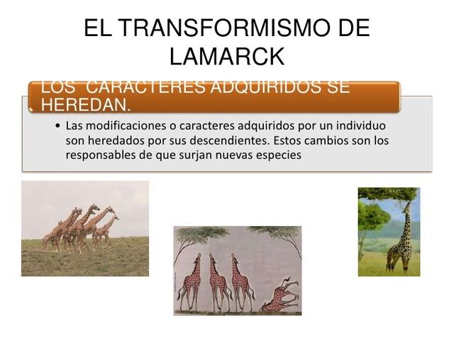 Postura de Lamarck II