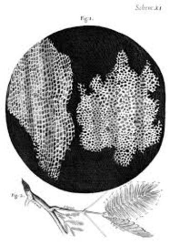 Robert Hooke(Teoría Celular)