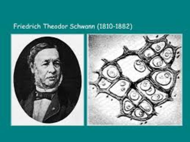 Theodor Schawann (teoría celular)