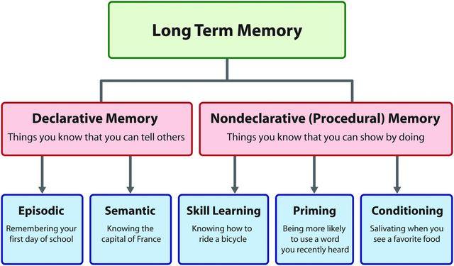 Paradis - Procedural vs. Declarative Memory