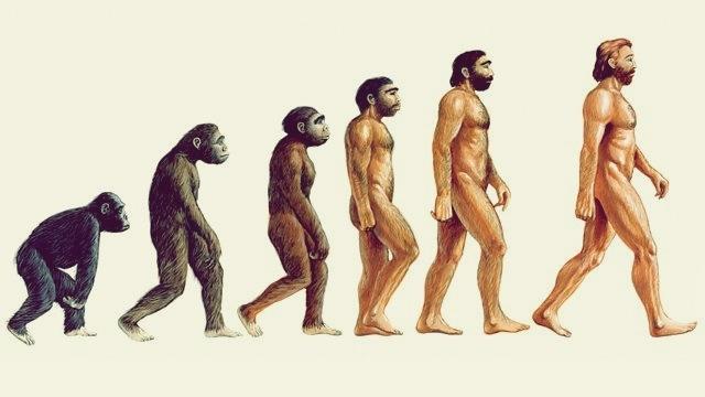 Evolución del primate