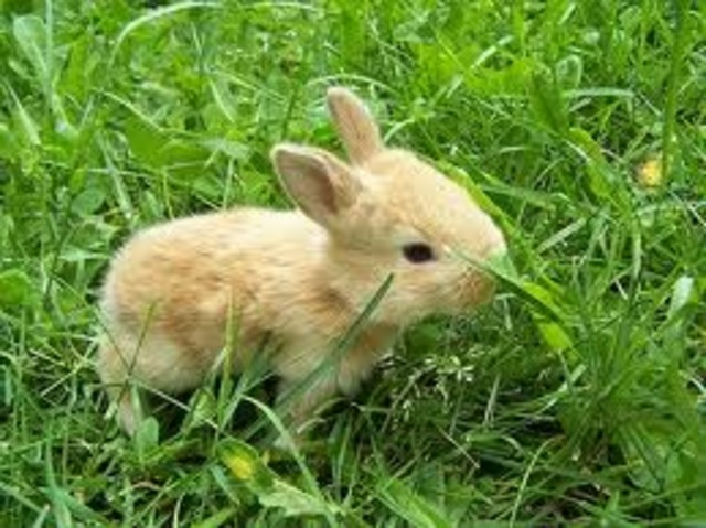 Rabbit abuse video highlights animal rights issue