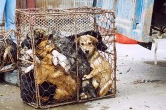 Unclaimed stray dogs in Shanghai to be put down
