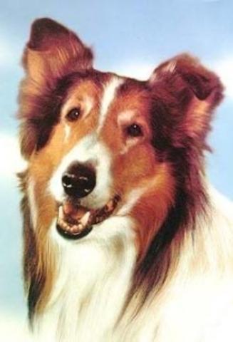 Lassie premiered on CBS-TV