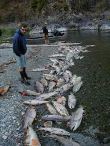 Salmon Fish Kill