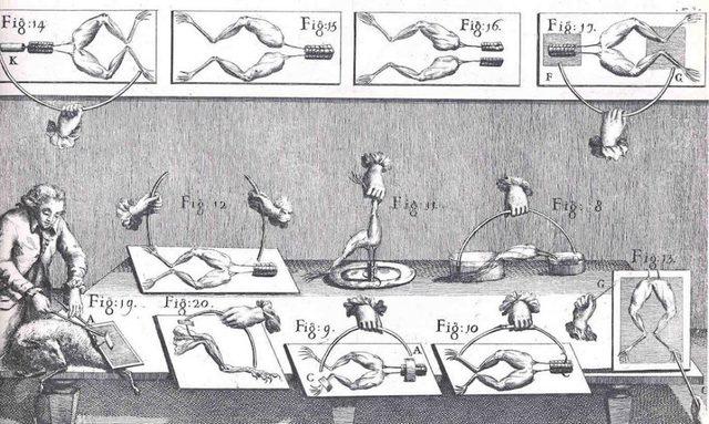 Edad Moderna- Conductividad en animales