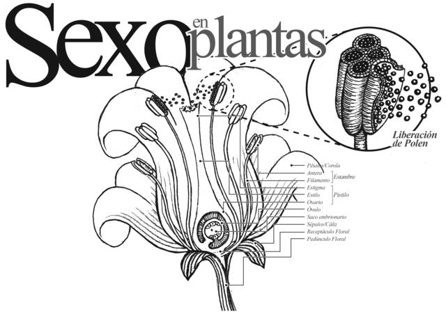 Barroco- Edad Moderna- Sexualidad de los vegetales
