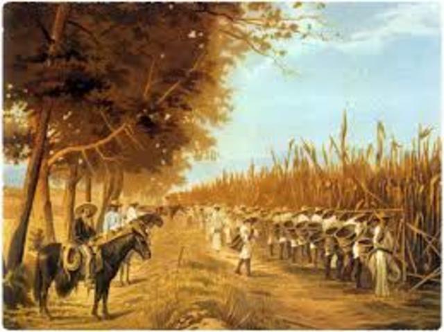 Se promulga la ley de deslinde y colonización de terrenos baldios