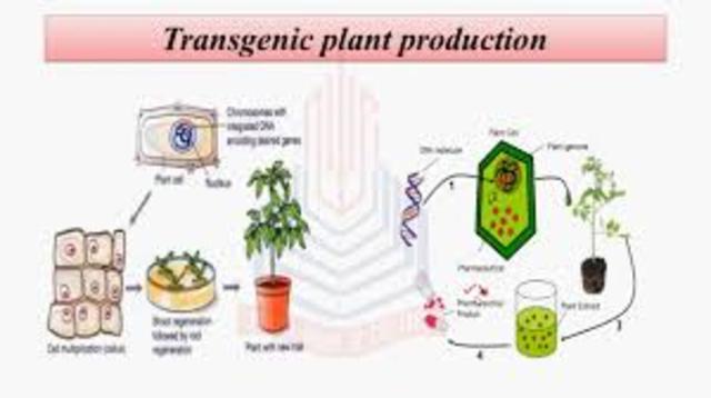 Trans genetic Plants