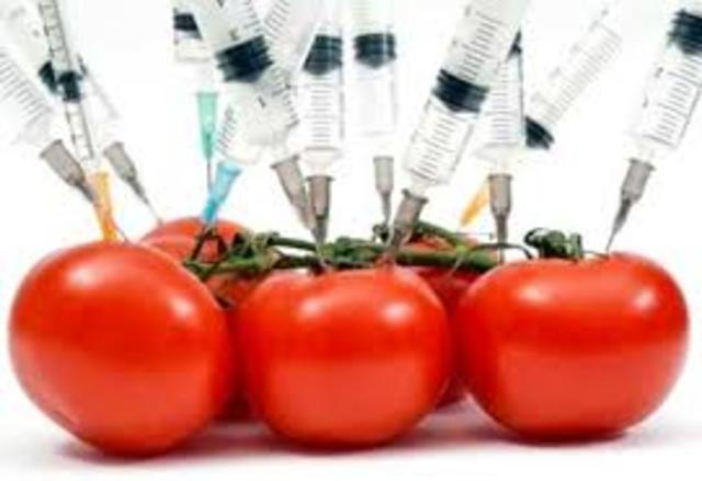 Flavr- Savr-Tomato