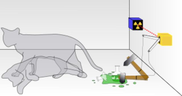 Erwin Schrödinger: Su Gato