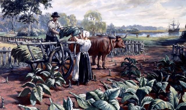 Tobacco cultivation begins in Virginia
