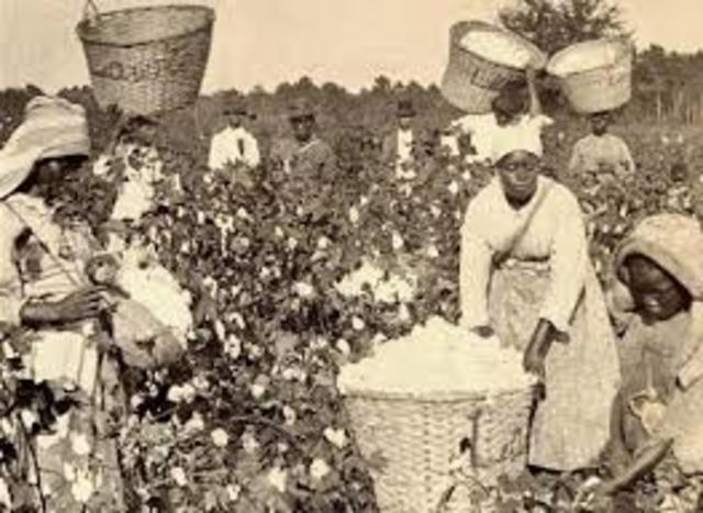 Virginia law regarding labor of African women