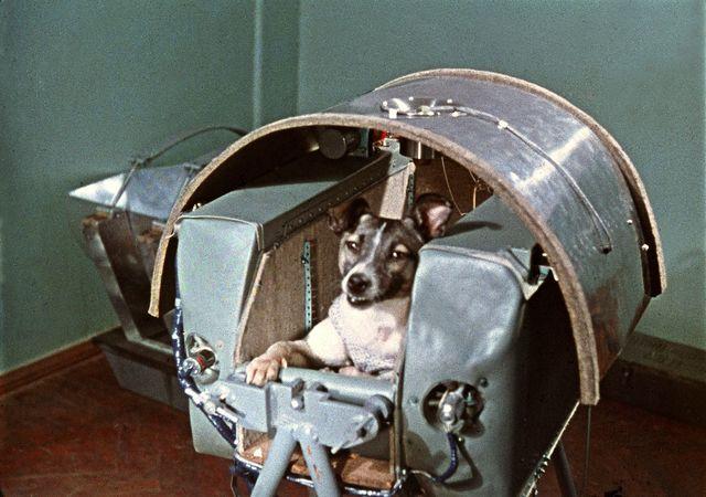 El primer ser vivo en el espacio, la perra Laika