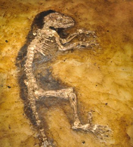 DARWINIUS Y LA EVOLUCION