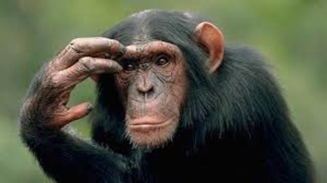 la adaptacion del simio