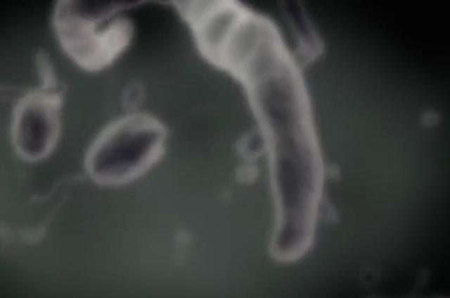 Los primeros seres vivos